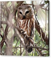 Patiently Watching Acrylic Print
