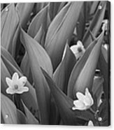 Pattern Of Flowers And Leaves - Monochrome Acrylic Print