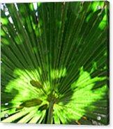 Green Plant Pattern Acrylic Print