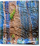 Pattern On Wet Canyon Wall From River Walk In Zion Canyon In Zion National Park-utah  Acrylic Print