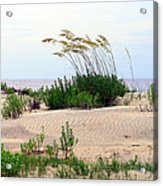 Patterned Dune With Oats Acrylic Print