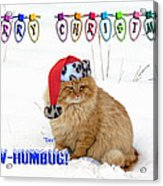 Paw Humbug Acrylic Print by Robyn Stacey