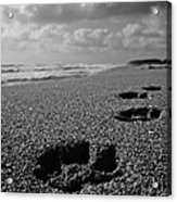 Paw Prints In The Sand Acrylic Print