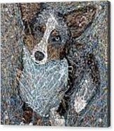 Pawlick No. 1 - Pembroke Welsh Corgi Acrylic Print