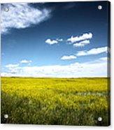 Pawnee Grasslands Acrylic Print