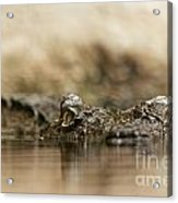Pay Attention Acrylic Print