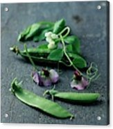 Pea Pods And Flowers Acrylic Print
