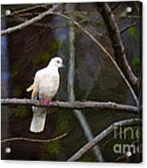 Peace Be With You Acrylic Print