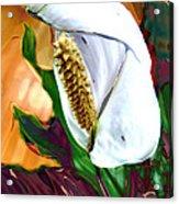 Peace Lily 2 Acrylic Print