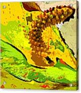 Peace Lily Waning Acrylic Print