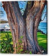 Peace Tree Acrylic Print