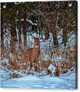 Peace Valley Park Deer Acrylic Print
