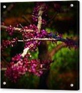 Peace With Purple Acrylic Print
