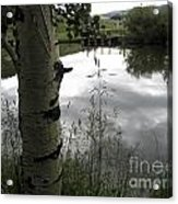 Peaceful Aspen With Pond And Clouds Acrylic Print