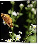 Peaceful Forest Acrylic Print