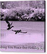 Peaceful Holidays Card - Winter Ducks Acrylic Print