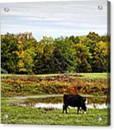 Peaceful Pastures Acrylic Print