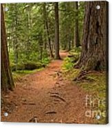 Peaceful Path To Cheakamus Lake Acrylic Print