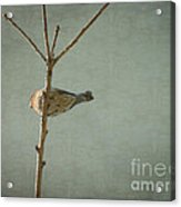 Peaceful Perch Acrylic Print