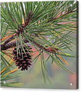 Peaceful Pinecone Acrylic Print by Stephen Melcher
