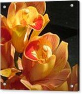 Peach Cymbidium Orchid Acrylic Print