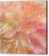 Peach Dahlia Acrylic Print
