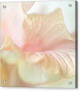 Peach Delicacy. Hibiscus Macro Acrylic Print by Jenny Rainbow