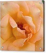 Peach Enchantment Acrylic Print