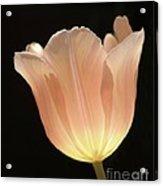 Peach Glow Acrylic Print