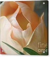 Peach Harmony Acrylic Print