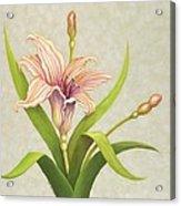 Peach Lily Acrylic Print