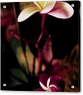 Peach Pink Orchid Acrylic Print