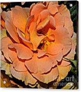 Peach Rose - Digital Paint Acrylic Print