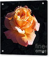 Peach Rose Palm Desert Acrylic Print