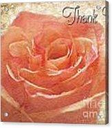 Peach Rose Thank You Card Acrylic Print