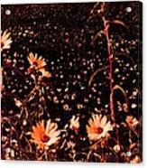 Peachy Keen Acrylic Print