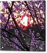 Peachy Sunset 2 Acrylic Print