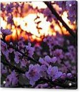 Peachy Sunset 3 Acrylic Print