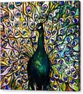 Peacock Acrylic Print by American School
