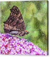 Peacock Butterfly Inachis Io On Buddleja Acrylic Print