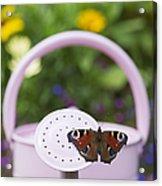 Peacock Butterfly Acrylic Print