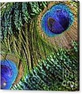 Peacock Eye And Sword Acrylic Print
