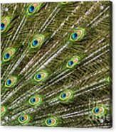 Peacock Feather Abstract Pattern Acrylic Print