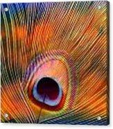 Peacock Feather Acrylic Print