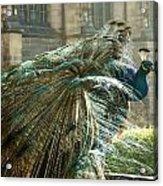 Peacock Flurry  Acrylic Print