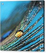 Peacock Gold Acrylic Print