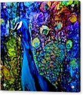 Peacock II Acrylic Print
