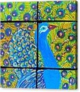 Peacock Ix Acrylic Print