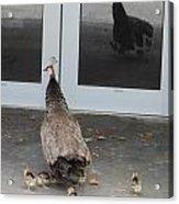 Peacock Mom And Kids 1 Acrylic Print