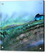 Peacock Tear Acrylic Print